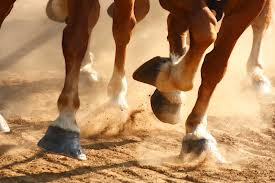 running horses, galloping, horses hooves, stampede